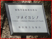 DSC08054.JPG
